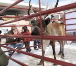 Santa's reindeer come back to play from 12 to 4 p.m. Monday on the Cooper Avenue Mall. The reindeer visit is one of the activities in the 12 Days of Aspen, a collection of activities and entertainment happening in town over the next two weeks.