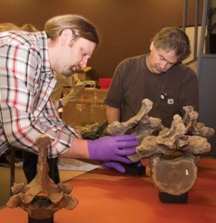 Courtesy of Denver Museum of Nature and ScienceDenver Museum of Nature and Science staff members Chad Swiercinsky and Jeff Yearick install a mastodon vertebral column found near Snowmass Village in preparation for the Mammoths and Mastodons: Titans of the Ice Age exhibit. The display features several pieces from the 2010 fossil dig in Ziegler Reservoir and opens Friday at the museum.