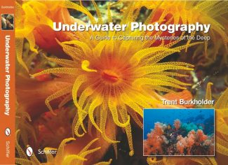 """Contributed photo""""Underwater Photography"""" by Trent Burkholder."""