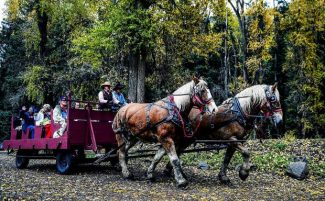 Prince and King, two draft horses from Maroon Bells Outfitters, lead the way on a hayride for a group of John Denver fans. The hayride is one of several events as part of the annual John Denver Celebration in Aspen.