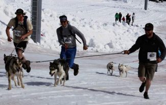 It's hard to tell who's having a better time at the 19th annual Sun Dog's K-9 Uphill, the dogs or the owners. An estimated 100 people and canines took part of the event on Saturday at Buttermilk Mountain. The uphill benefits local animal shelters.