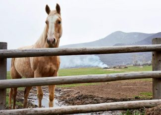 A horse stands in a pasture Wednesday morning as landscaping crews burn branches from a cleanup along Watson Divide.