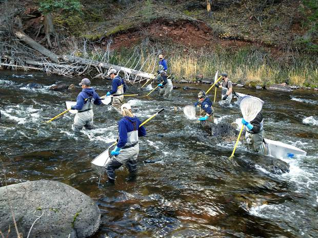 Scientists check fryingpan river health for Millers river fly fishing