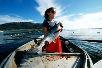 Amy Cordalis, a member of the Yurok Tribe, brings in a salmon near the mouth of the Klamath River in Requa, California. Biologists believe the removal of four dams on the Klamath River would greatly increase the health and size of its salmon runs.