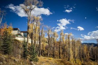 A Red Mountain homeowner allegedly cut the tops off of 127 cottonwood trees last year to obtain a more optimal view. Pitkin County commissioners imposed a 20-year monitoring period for the trees that it wants replanted, though the homeowner is disputing the condition.