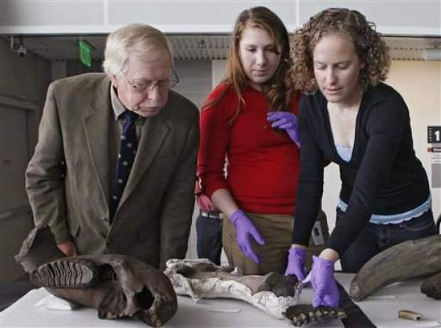 <b>Special to the Snowmass Sun</b>Intern Kaitlin Stanley, left, and Dr. Kirk Johnson clean a mastodon tusk under a tent to protect the tusk from sunlight.