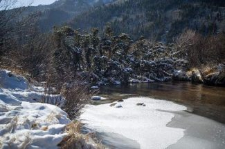 An approximately 80-foot-tall spruce tree that fell across the Roaring Fork River on Nov. 17 in the North Star Nature Preserve will be at least partially removed.