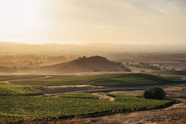 Gap's Crown Vineyard on California's Sonoma Coast is a sweet spot for pinot noir.