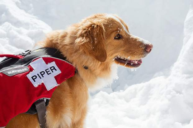 Avalanche Rescue Dog Breeds