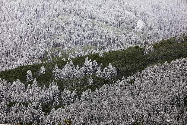 Aspens and snow-covered pines Thursday in Eagle Vail after a strong winter storm hit the Vail Valley and Colorado. Snow is expected through Friday.