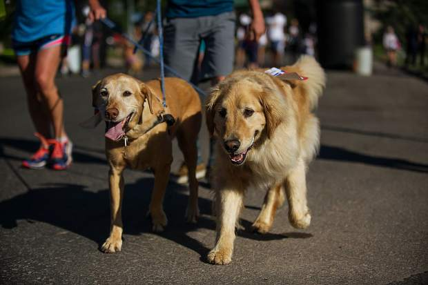 Dogs in the canine and family Boogie's Buddy Program Run in Aspen on Tuesday.