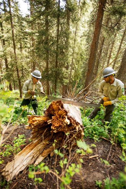 Aspen's ideal job — keeping forest trails clear