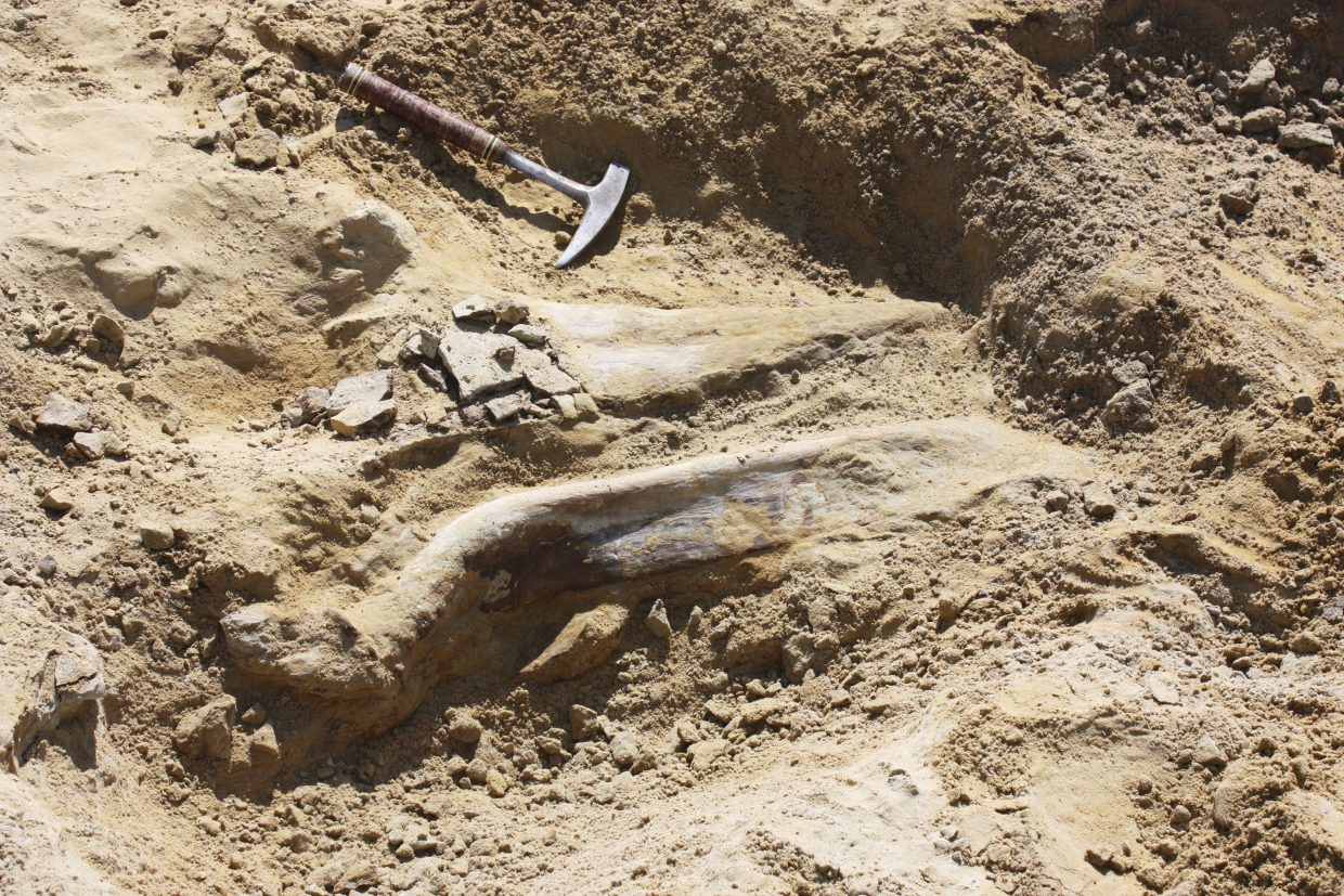 Rare triceratops fossil found at Colorado construction site