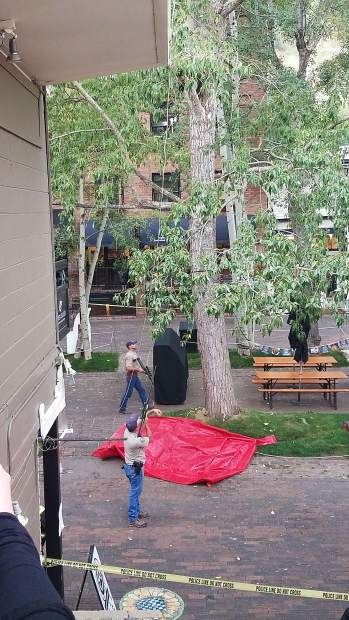 Colorado Parks and Wildlife officials tranquilized a mother bear and her two cubs on Thursday after they spent the past few days in a tree in downtown Aspen.