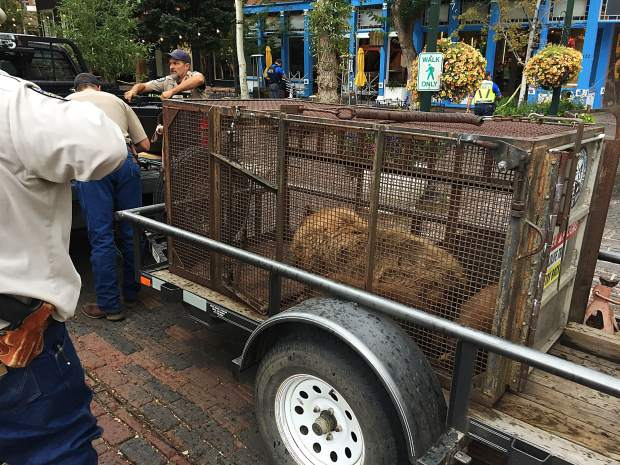 Colorado Parks and Wildllife officials said Thursday they will relocated the mother bear and two cubs somewhere