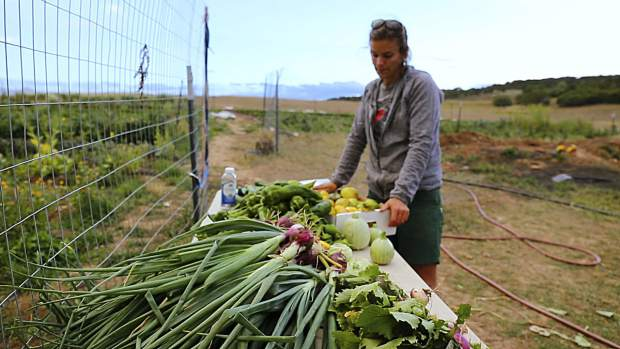 Erin Cuseo checks out the harvest at Erin's Acres. She is among the farmers in the spotlight in the documentary 'How We Grow.'