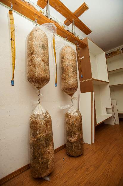 Copper Means of Shining Mountains Farm uses a unique process to grow mushrooms at a property he leases at Lazy Glen Open Space.