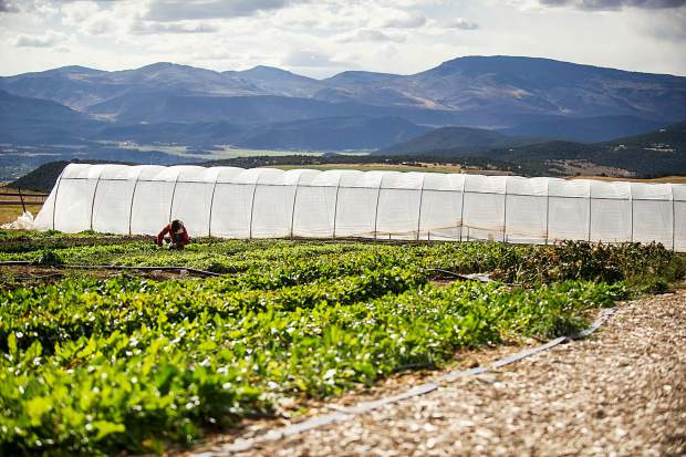 Harper Kaufman, co-owner of Two Roots Farm with Christian La Bar, works last fall on the land they lease in Missouri Heights.