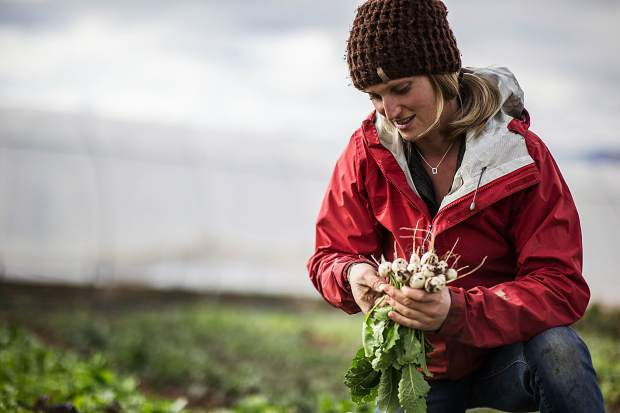 Harper Kaufman, co-owner of Two Roots Farm, works on the land they lease in Missouri Heights last fall.