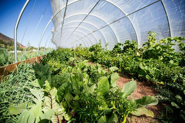 Vegetables being grown inside the green house by Erins Acres Farm on the Lazy Glen Open Space across from Old Snowmass.