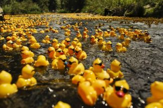 Aspen Rotary Club looking for 'plan B' to Ducky Derby because of low river levels