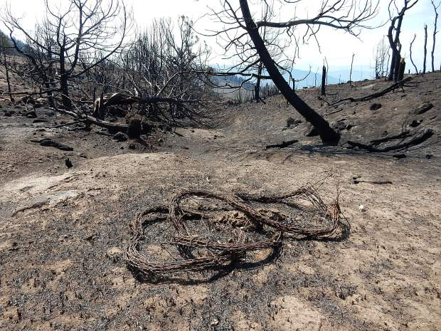A dry ravine in the Basalt State Wildlife Area is surrounded by ash and charred tree trunks. A team is assessing the risk of floods and mudslides from the Lake Christine Fire area.