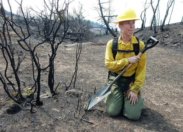 Beth Anderson, a soil scientist with the U.S. Forest Service, shows Saturday how suckers are already shooting up from oak brush roots within the Lake Christine Fire.
