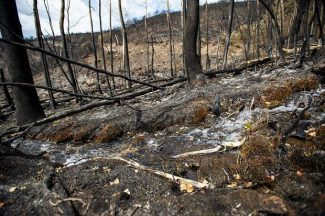 "Firefighting team aims to ""speed up"" effort to snuff Lake Christine Fire"