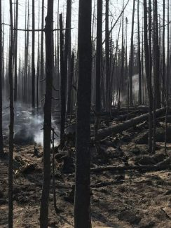 Report assesses mud, flood and hazardous tree threats in aftermath of Lake Christine Fire