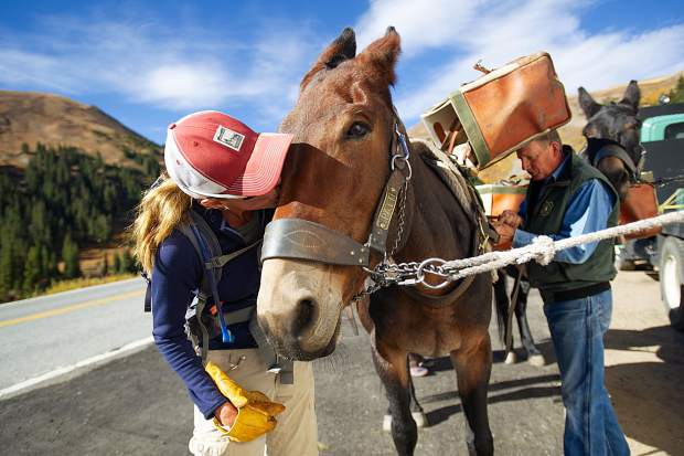 Independence Pass Foundation executive director Karin Teague kisses Patti the mule while U.S. Forest Service