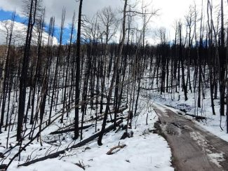 Lake Christine Fire leaves stark beauty on Basalt Mountain