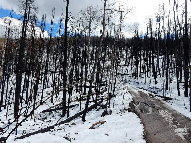The landscape on Basalt Mountain showed a stark contrast Thursday, with snow-covered slopes and burned out tree trunks. The damage is most severe starting about 3 miles up Basalt Mountain Road from the main parking lot.