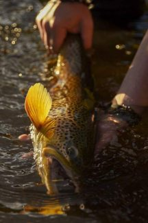 On the Fly: Fall delight brings fishing without crowds