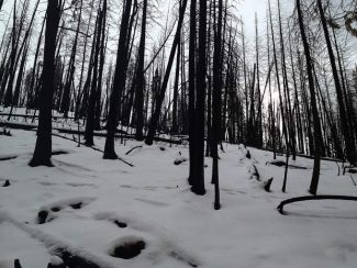 Forest Service proposes project to help Basalt Mountain heal from Lake Christine Fire