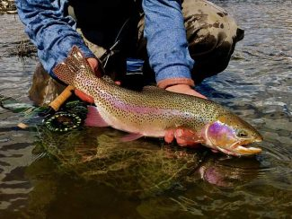 On the Fly: Ringers in the riffles