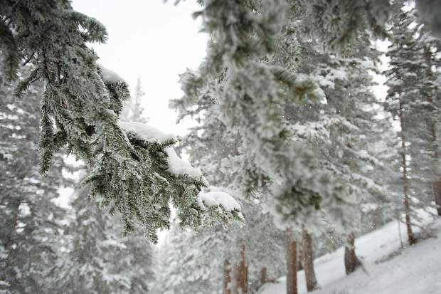 Snow covered trees on Deception over in Olympic Bowl on Aspen Highlands for opening day on Saturday.