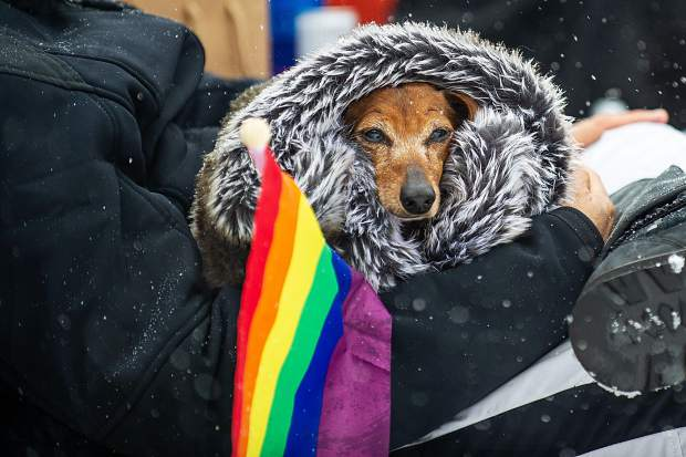 A dachsund stays warm from the snowy afternoon at the base of Aspen Mountain watching the Gay Ski Week costume downhill on Friday.
