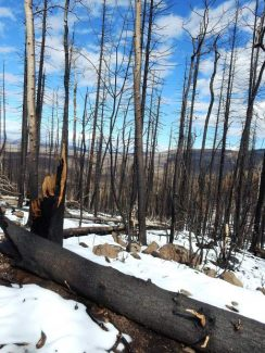 Aspen Center for Environmental Studies examines how the forest will recover from Lake Christine Fire