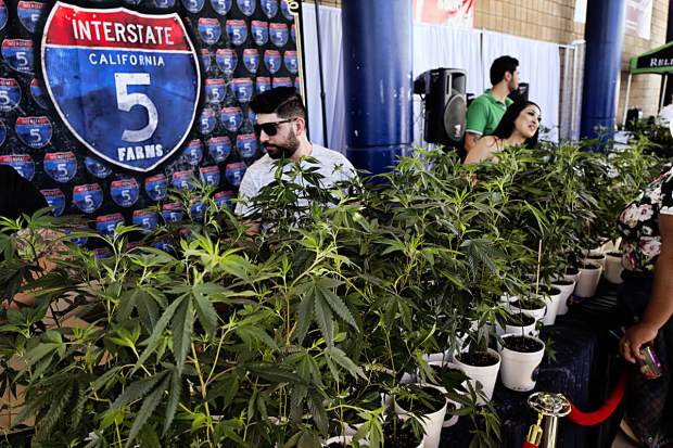 Legal Marijuana Industry Toasts Another Banner Year More Growth
