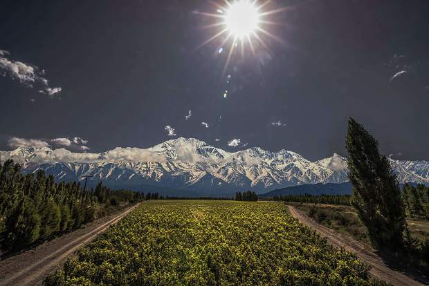 The Adrianna Vineyard in Argentina benefits from the hot climate and high altitude terroir to produce some of the worlds best malbec grapes.