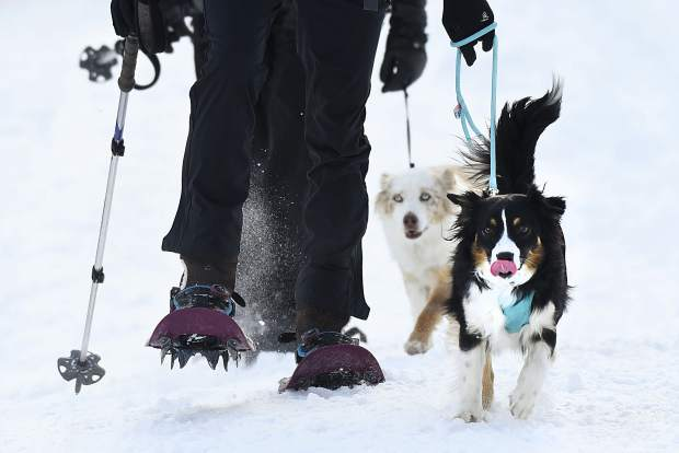 Four-legged furry friends enjoy the festivities Sunday at Sunlight Mountain.