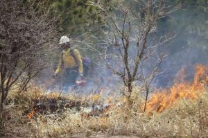 BLM announces prescribed burn plans for area counties