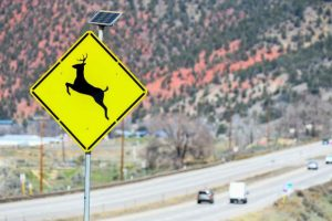Drivers need to be aware of deer, elk lingering in lower elevations, officials warn