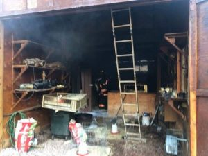 Pheasant chicks killed when fire starts in coop in Fryingpan Valley