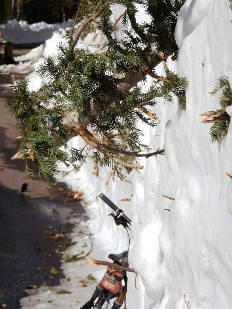 Tree limbs jut out from the snowbank cleared by CDOT while plowing through the Green Mountain avalanche debris on Highway 82.