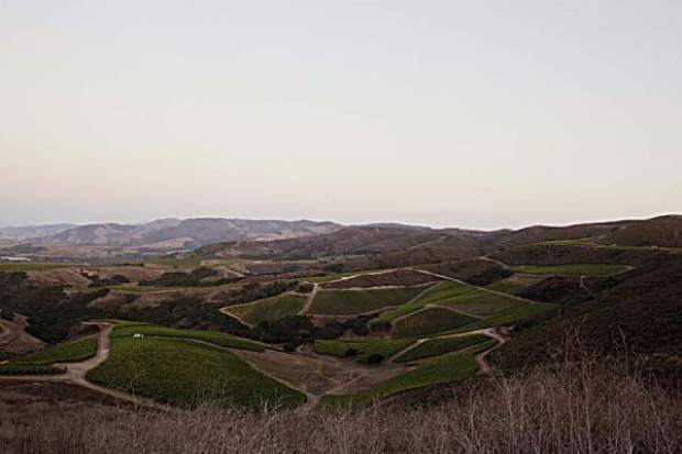 The limestone soils of the Sta. Rita Hills wine appellation of Santa Barbara County in California is the home of Sandhi wines. It is one of the most important pinot noir and chardonnay growing regions in the new world.