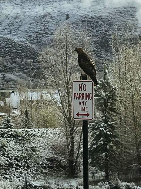 Paul Dorich caught this hawk parking himself atop a sign Friday morning on the road into Burlingame.