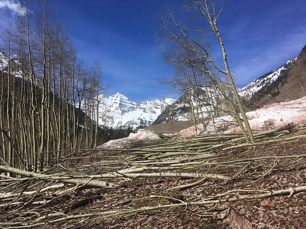 Aspen trees are strewn like toothpicks on the Maroon Creek Road corridor in this image from mid-April.