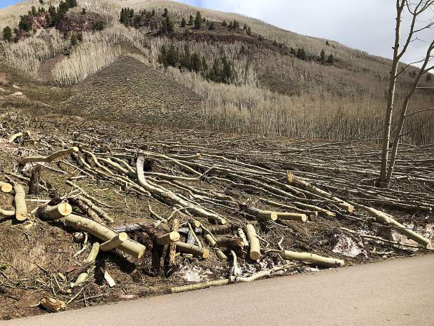 Another avalanche path, this time on the west side of Maroon Creek Road, that took out hundreds of aspen trees. Firefighters from Aspen and Glenwood Springs cut and cleared the trees.