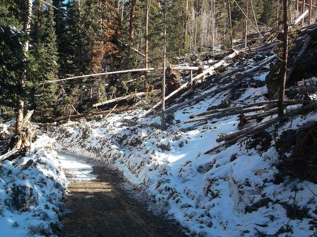 An avalanche toppled numerous tree trunks and other debris where campsite No. 9 used to be along Lincoln Creek Road.